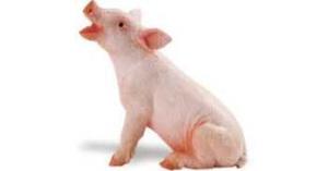 pig_toy_piglet