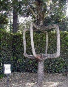 amazing_tree13