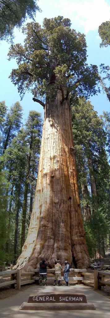 amazing_tree6 (1)