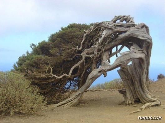 most_unusual_trees_38
