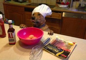 dog-cooking
