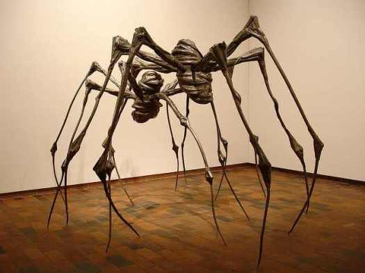 indoor spider