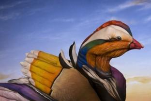 Mandarin-Duck-509x340