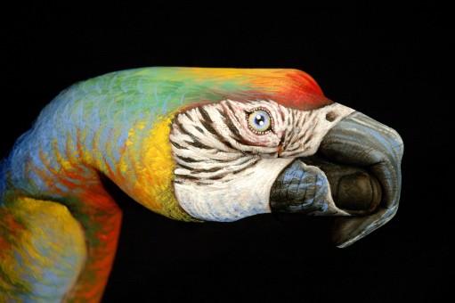 Parrot-un-black1-511x340
