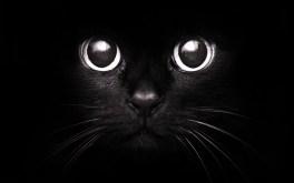 black-cat-946162872