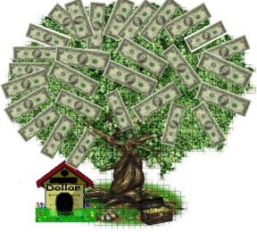 money tree plant 3