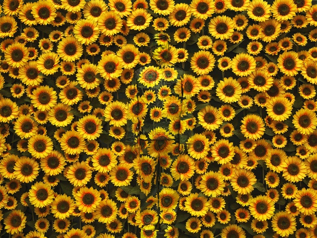 liu-bolin-hide-in-the-city-n°113-sunflower-1