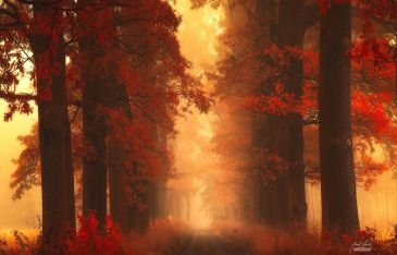 dreamlike-autumn-forests-janek-sedlar-22__880