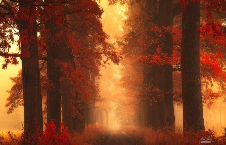 dreamlike-autumn-forests-janek-sedlar-22__880