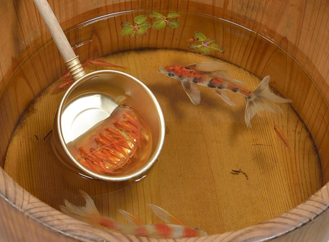 goldfish-9