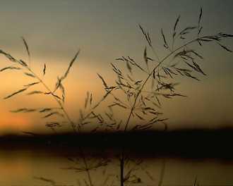 landscape-022