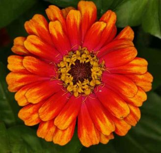 red-and-orange-flower-4