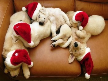 christmas_animals_pictures_7