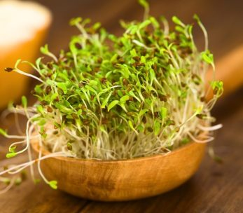 klice_fresh-alfalfa-sprouts-in-a-white-plate-3