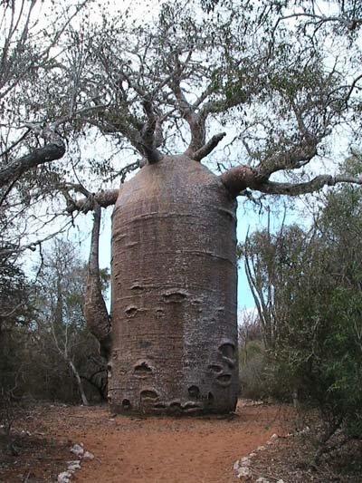 amazing_tree11